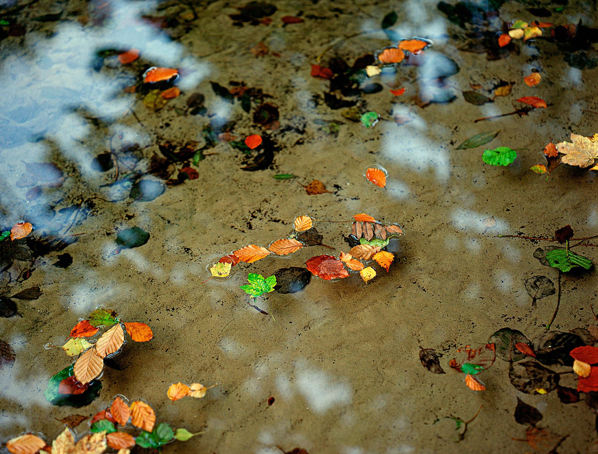 Leaves float autumn colors at Mølleåen