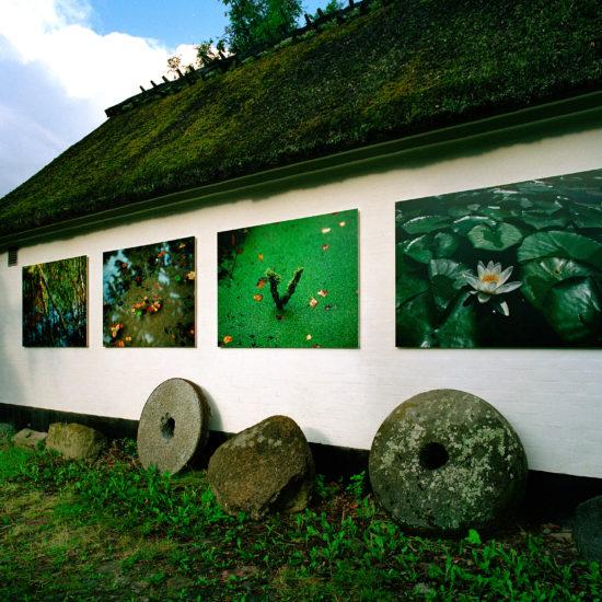 Mikkel Alexander Grabowski's exhibition about Mølleåen at Mosegården Museum in Værløse