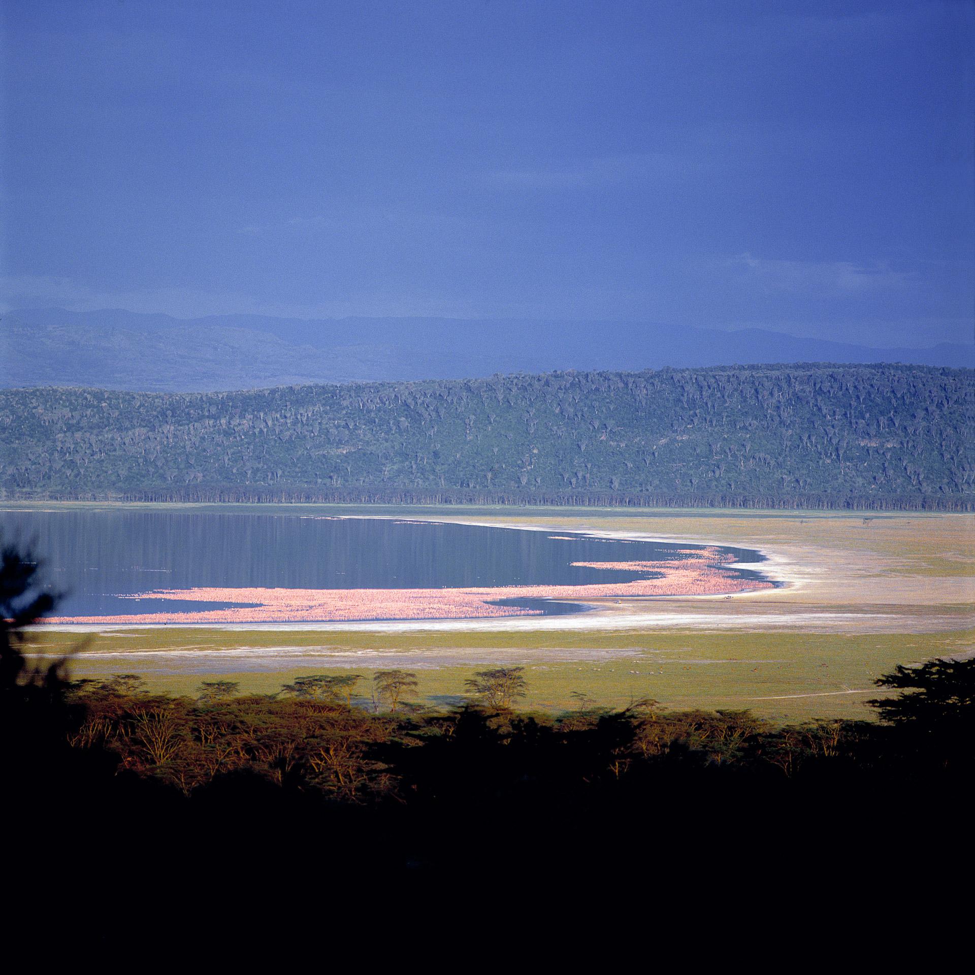 Lake Nakuru and thousands of pink Flamingos