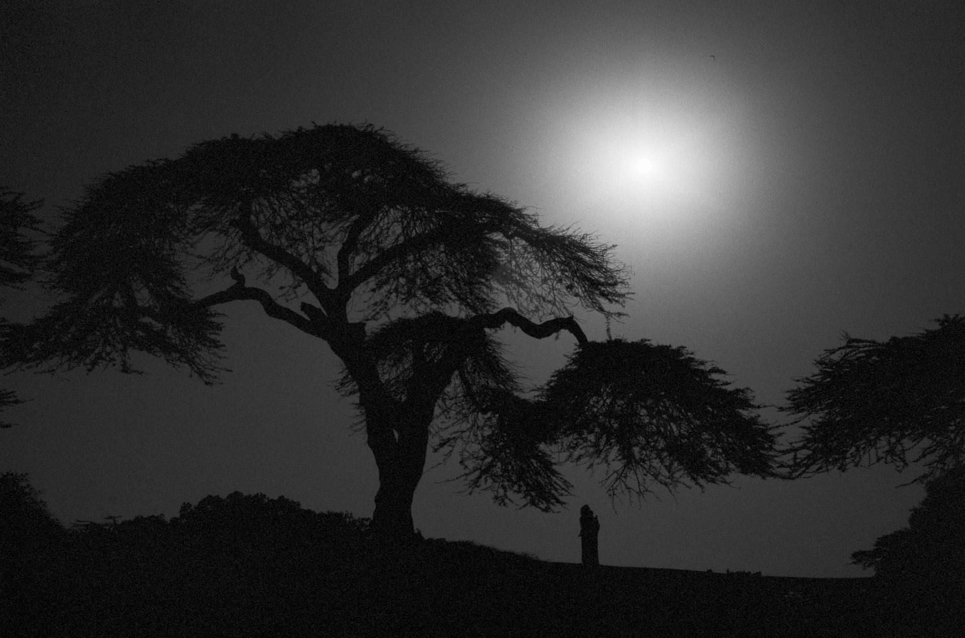 A woman and acacia tree at Lake Awasa in Hawassa