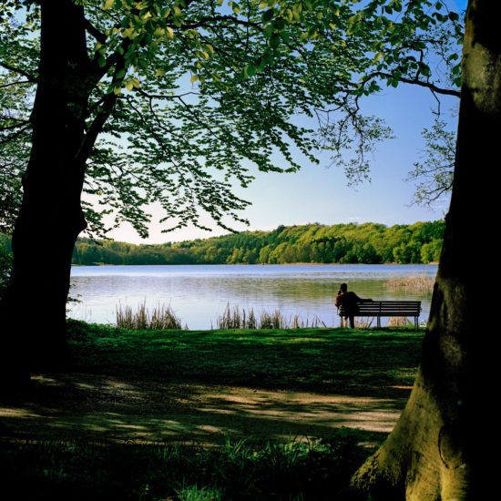 A man sitting on a bench enjoying the tranquility and peace at Bagsværd Lake