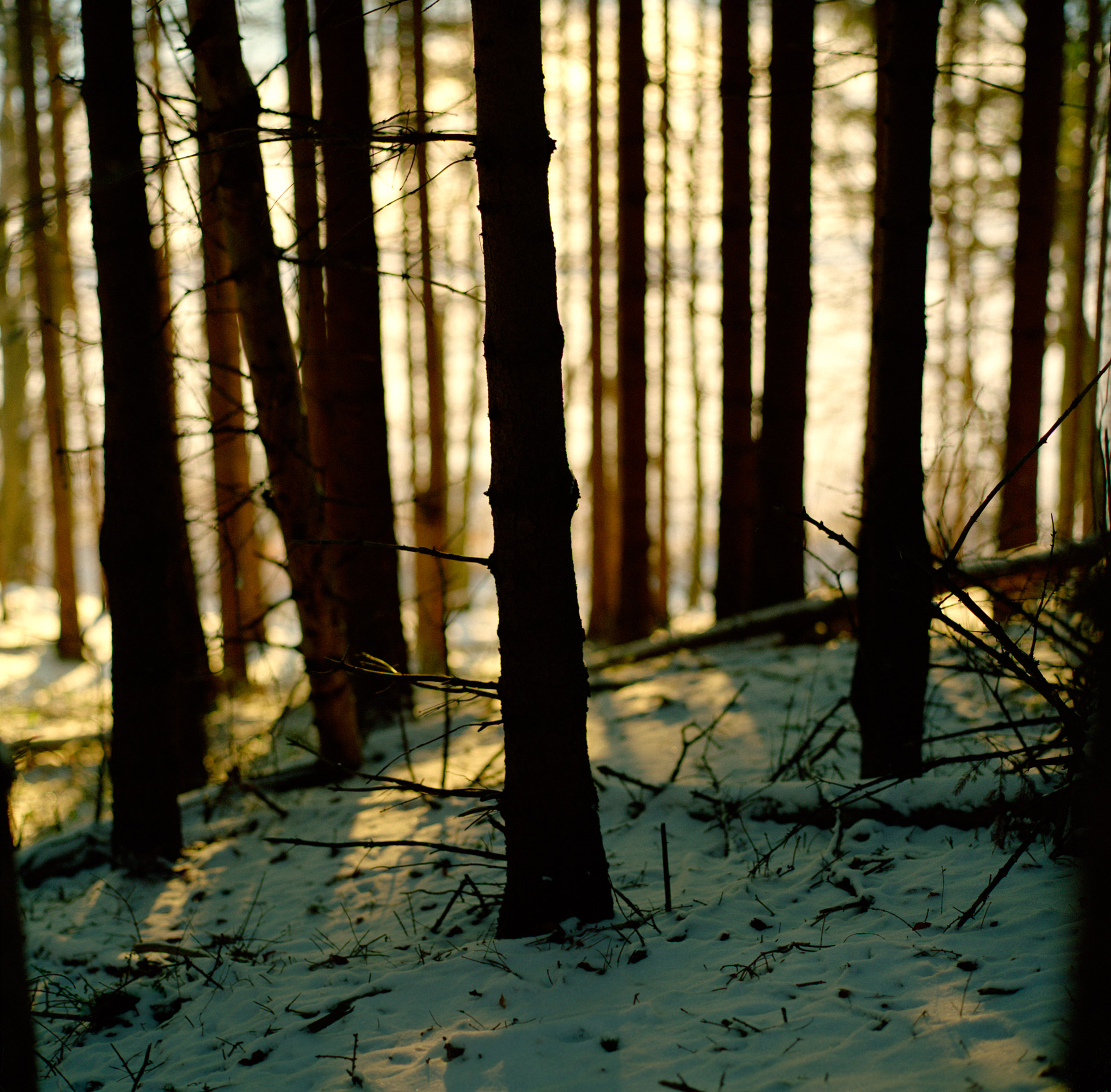Trees at Mølleåen Bagsværd Sø in winter with snow