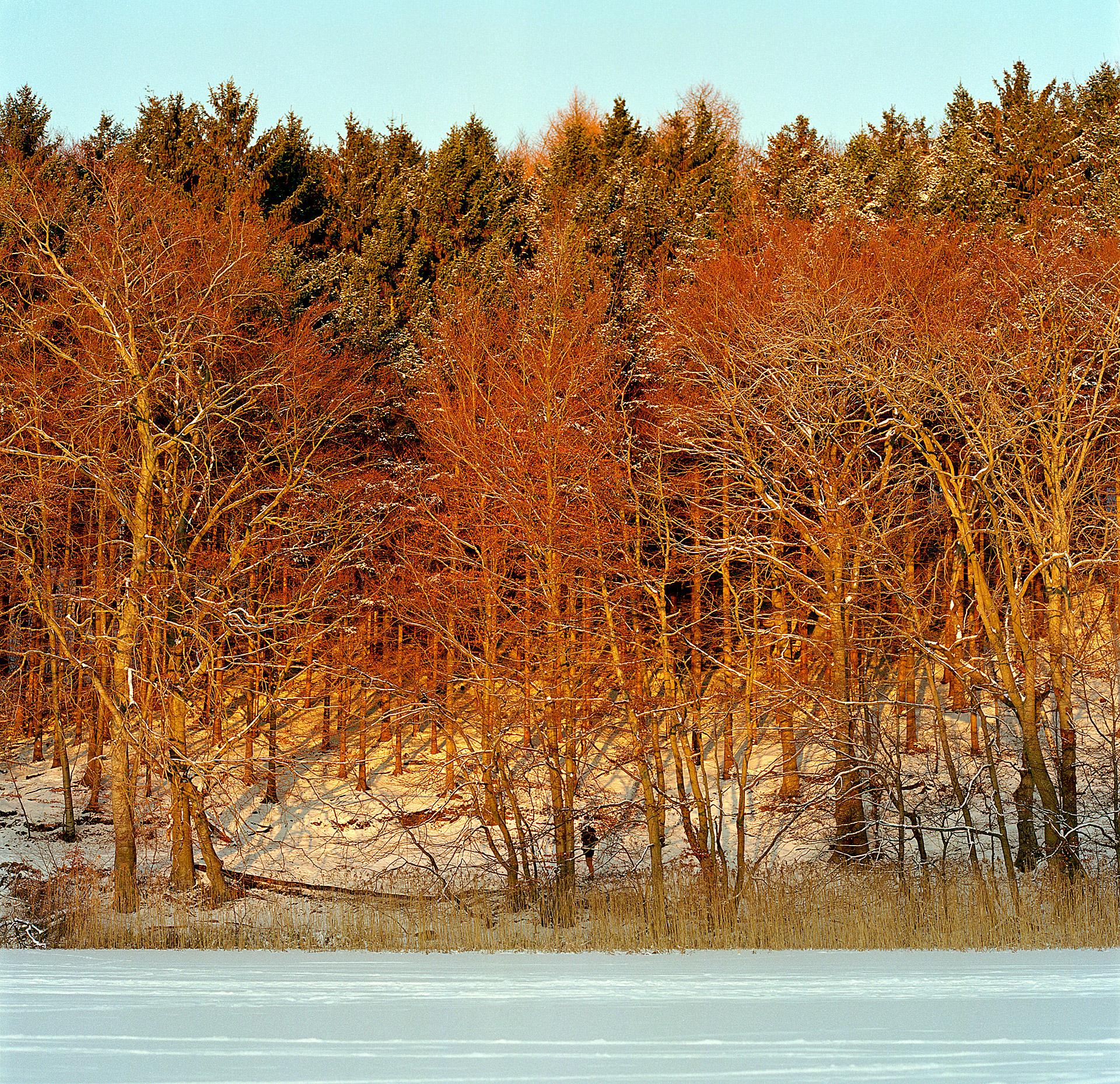 Sunset colors in Winter at Bagsværd Sø and Mølleåen