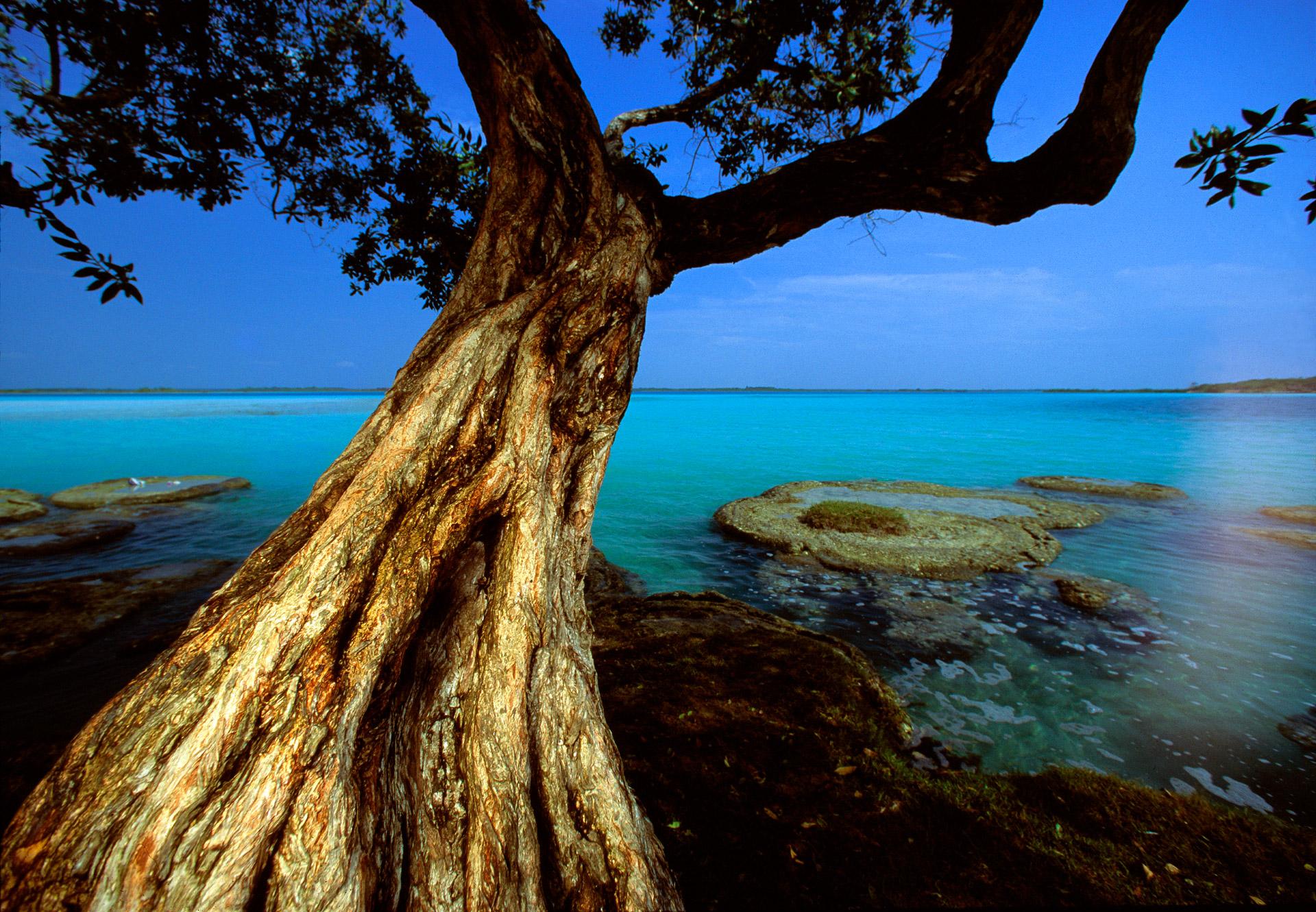 Tree at Lago Bacalar in Yucatan, Mexico