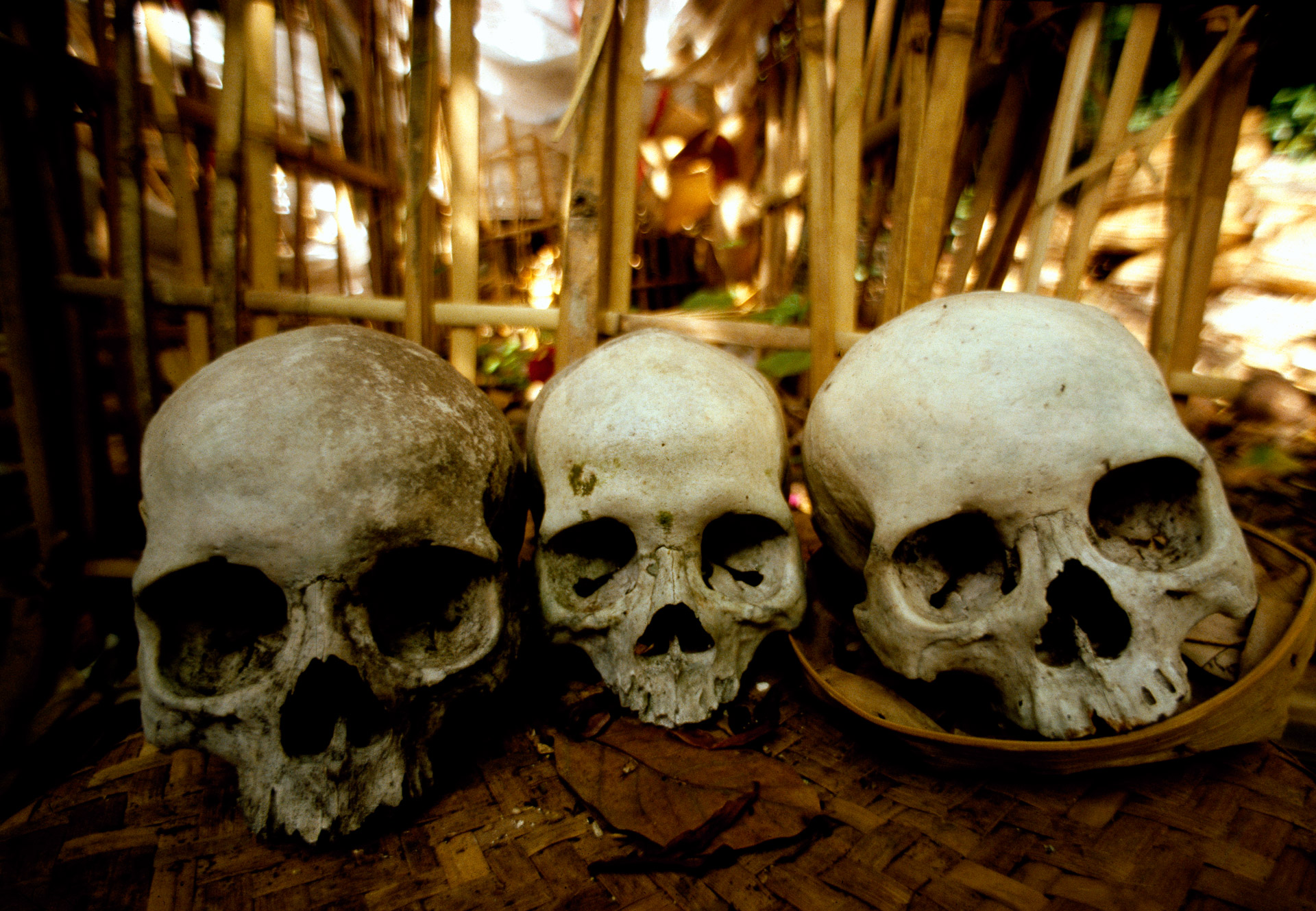 Human Skulls at an open air burial site in Bali