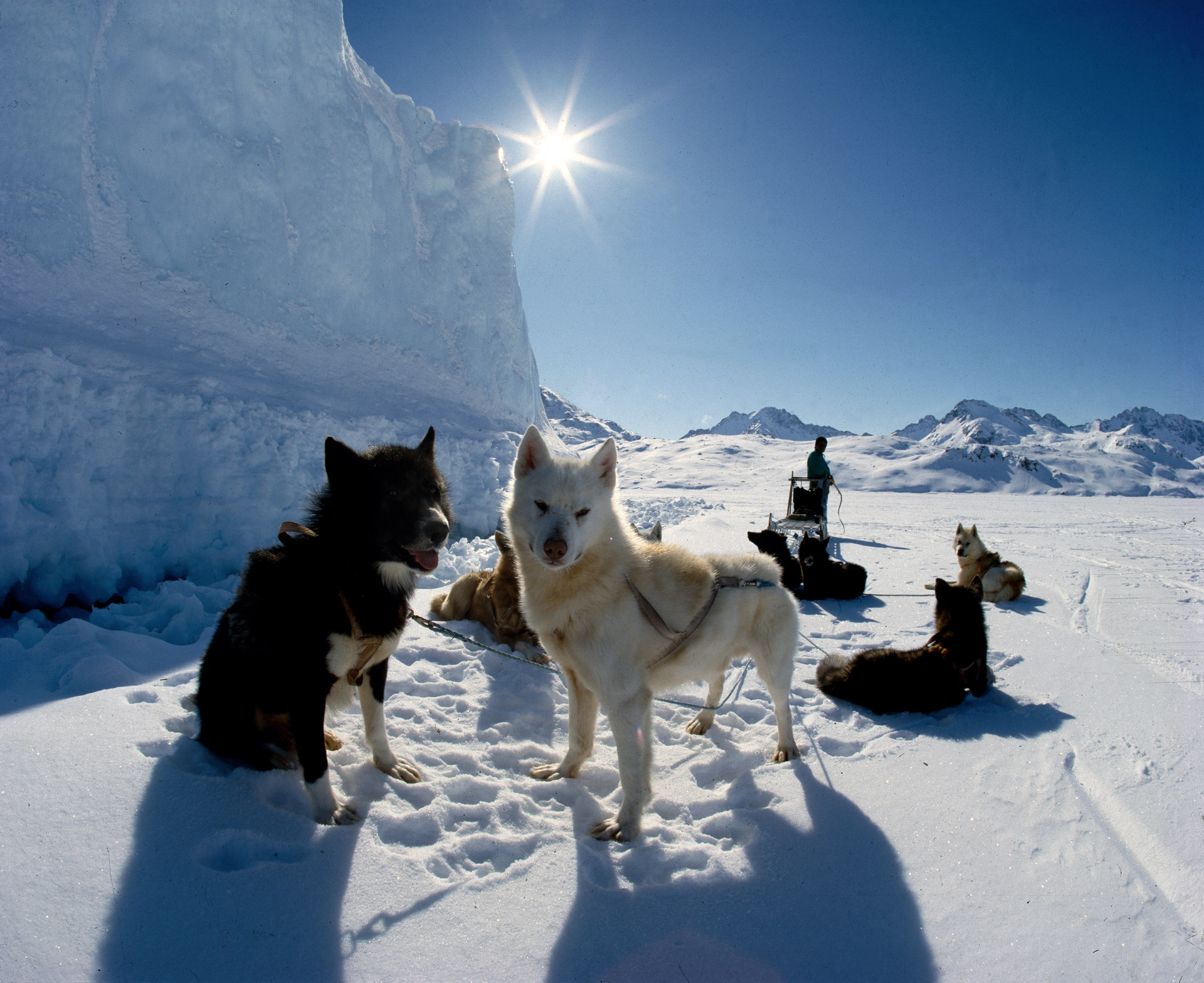 Sledge dogs in Greenland near Ammassalik taking a well deserved break