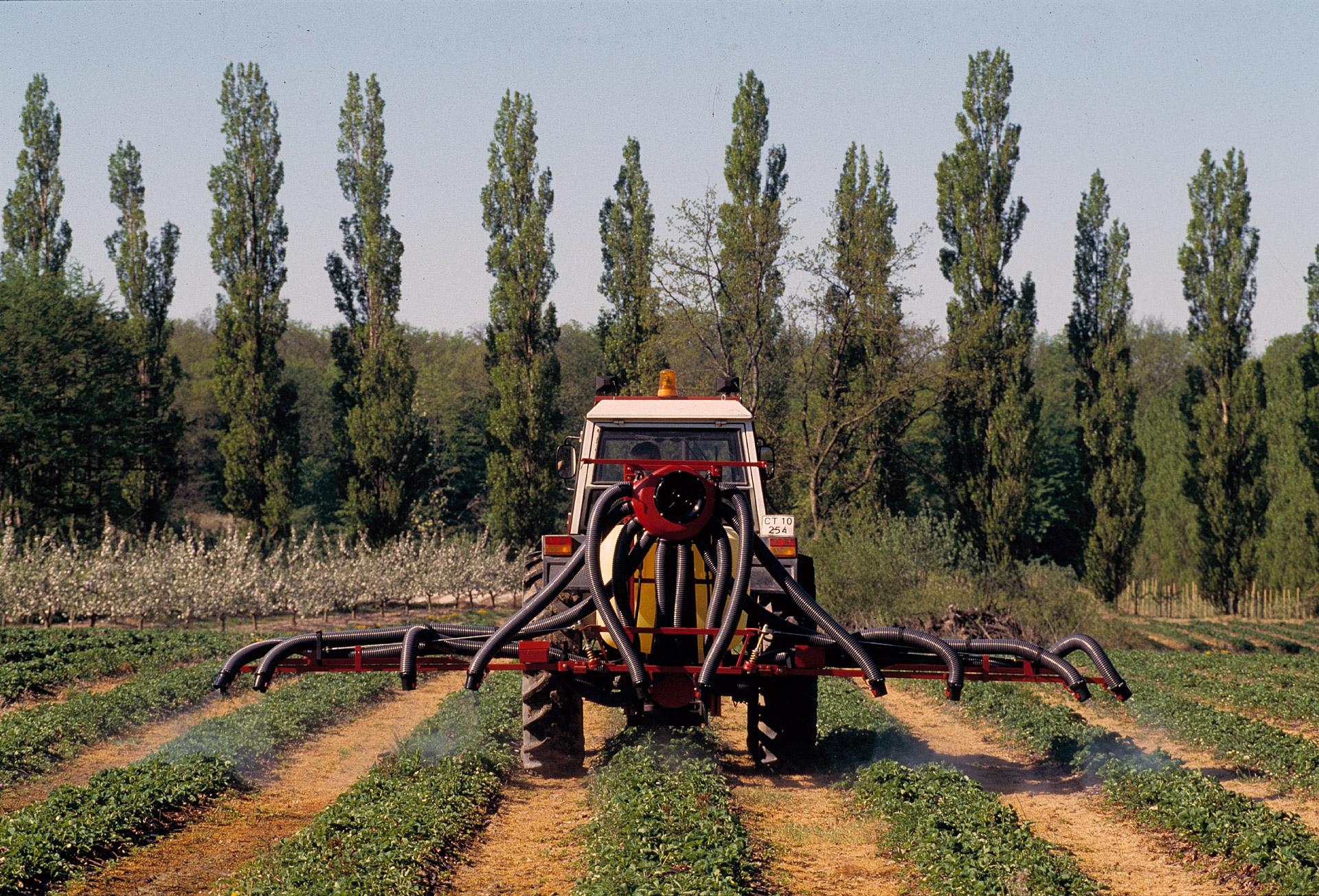 Pesticides are being sprinkled onto strawberries. Hardi International