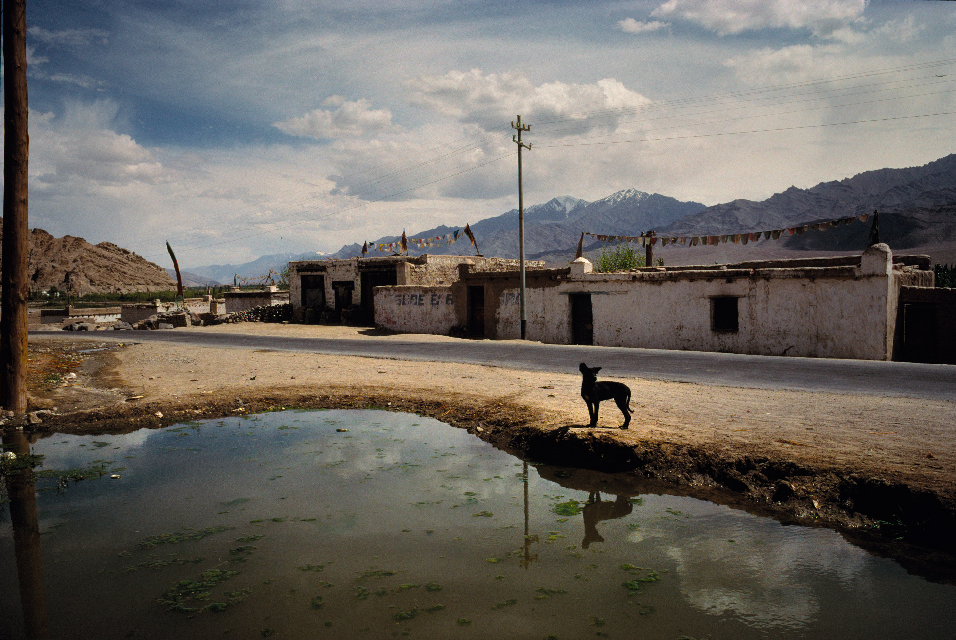 A dog in the street of aq small village in Ladakh near Thiksey Monastery
