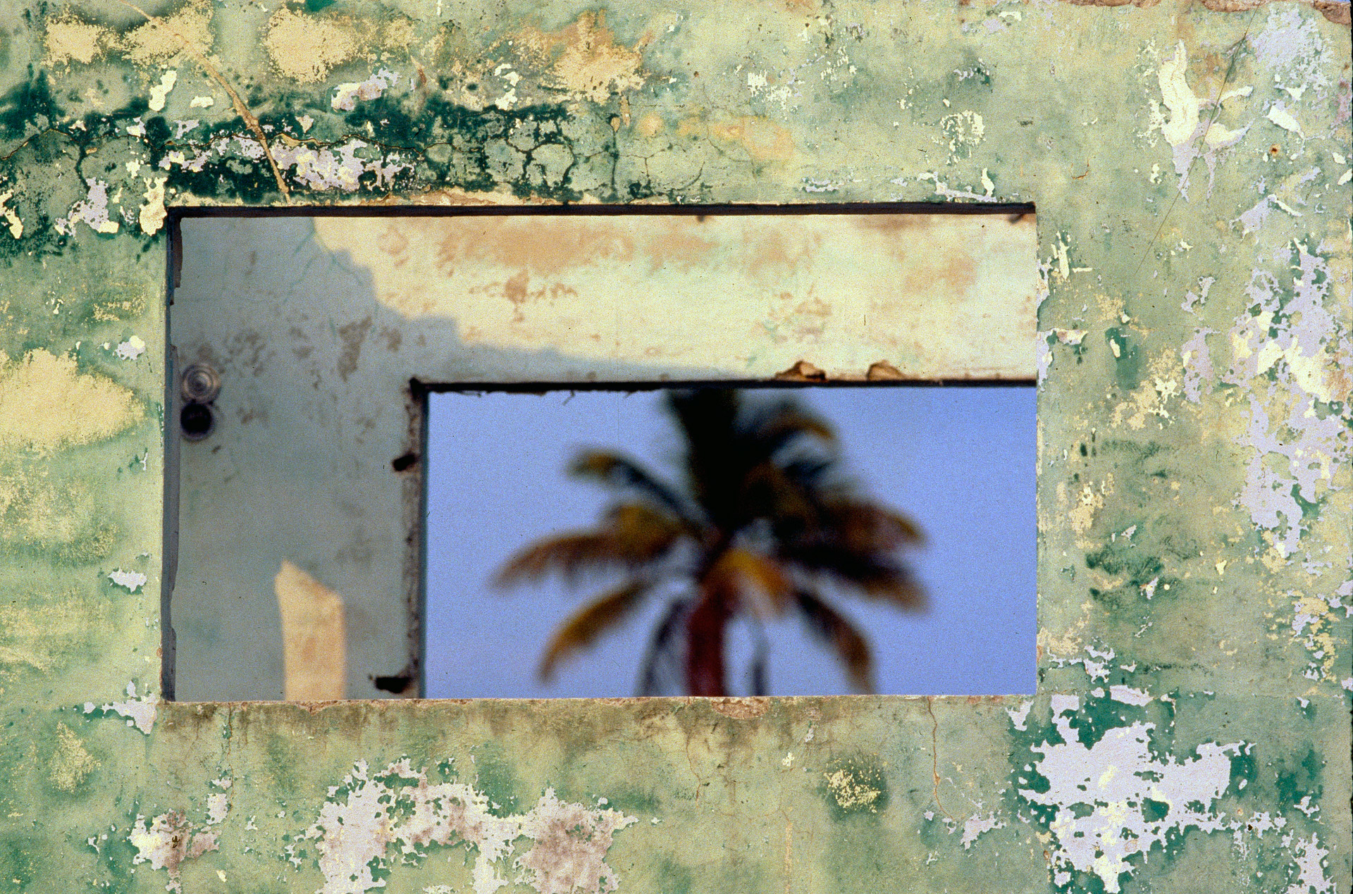 A palm tree and walls in Tulum in Mexico